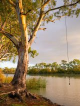 Murray Princess: Adelaide and Murray River package