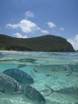 Dive Lord Howe Island