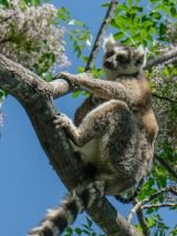 Splendours of Madagascar with return airfares