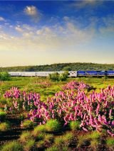 Coral Coast discovery cruise and rail package