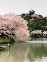 Dubai to Japan with Return Flights