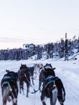 Snowmobiles, Dog Sleds & Snowshoes with return flights