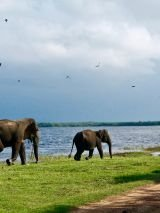Circle Sri Lanka - For Solo Travellers