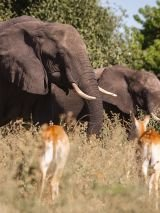 Hwange, Falls & Chobe Experience with Return Flights