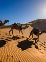 Best of Morocco - for solo travellers