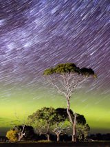 Search for the Southern Lights of Tasmania